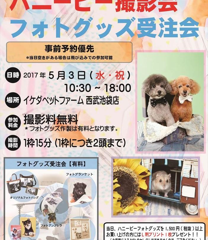05イケダハニービー撮影会_イケダペットファーム西武池袋店(5月)