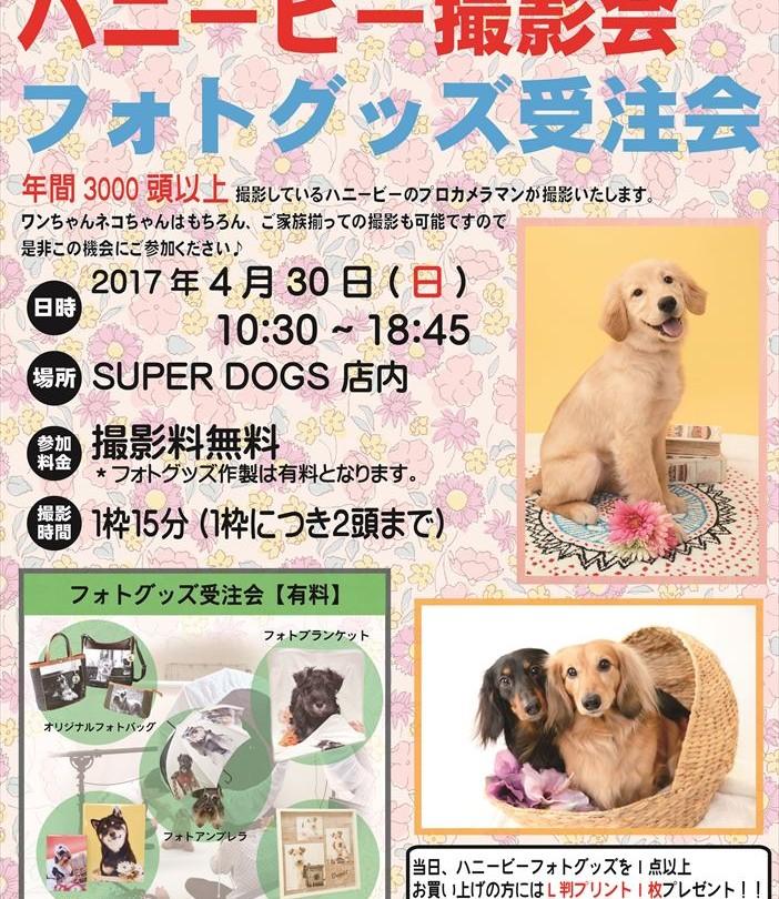 0430中央林間ハニービー撮影会_SUPER DOGS(4月)