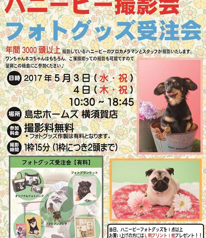 05横須賀ハニービー撮影会_島忠ホームズ横須賀店(5月)