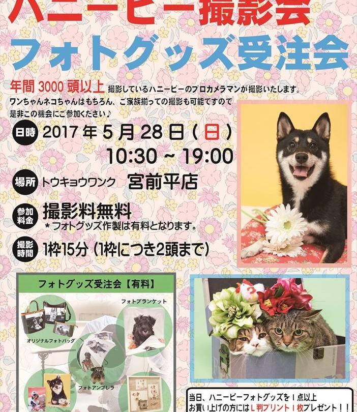 0528宮前ハニービー撮影会_トウキョウワンク宮前平店(5月)