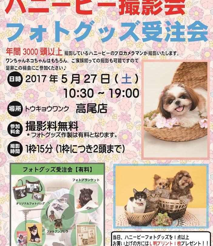 0527高尾ハニービー撮影会_トウキョウワンク高尾店(5月)