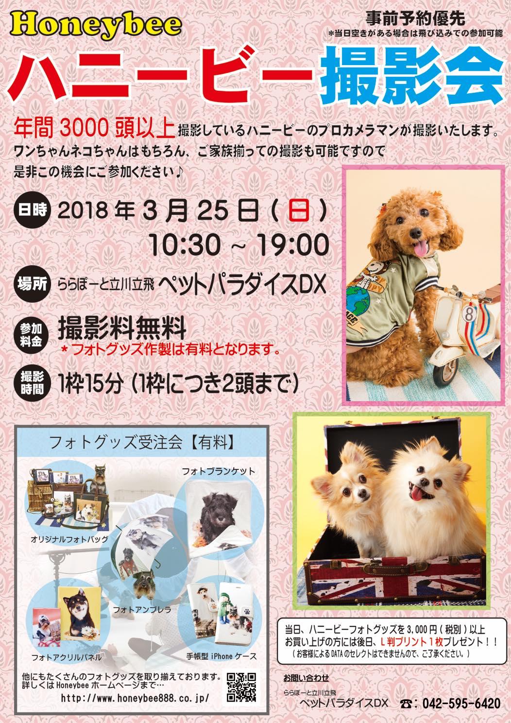 th_ハニービー撮影会_ららぽーと立川立飛 ペットパラダイスDX(3月)