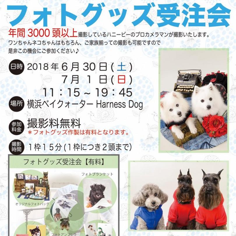 th_ハニービー撮影会_横浜ベイクォーターHarness Dog(7月)