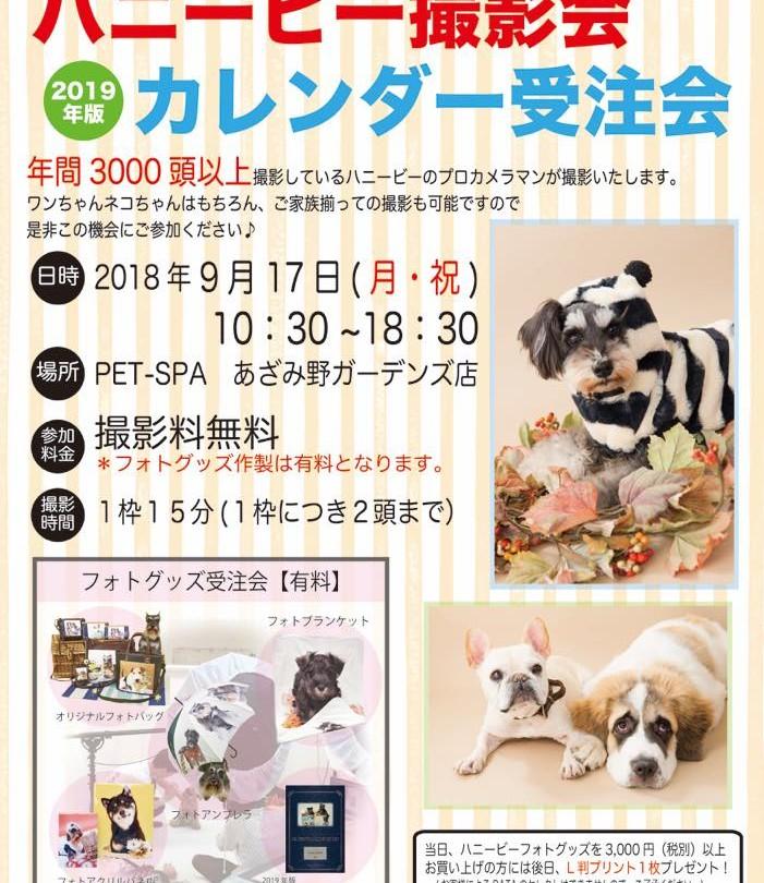th_ハニービー撮影会_PET-SPAあざみ野ガーデンズ店(9月)