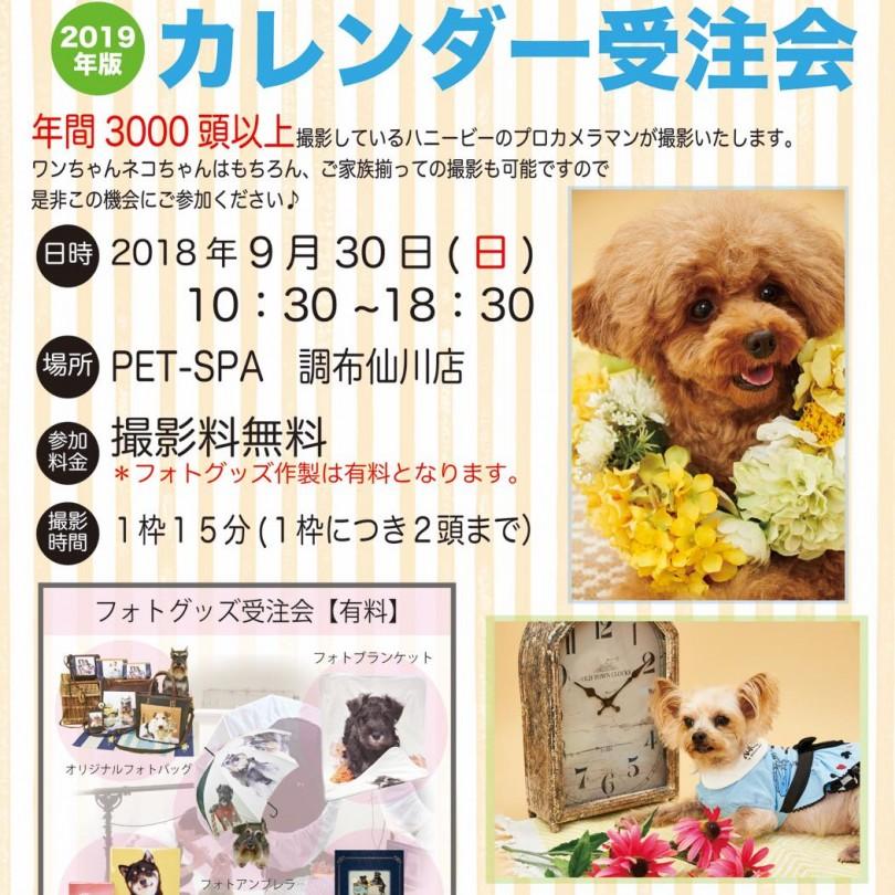th_ハニービー撮影会_PET-SPA調布仙川店(9月)