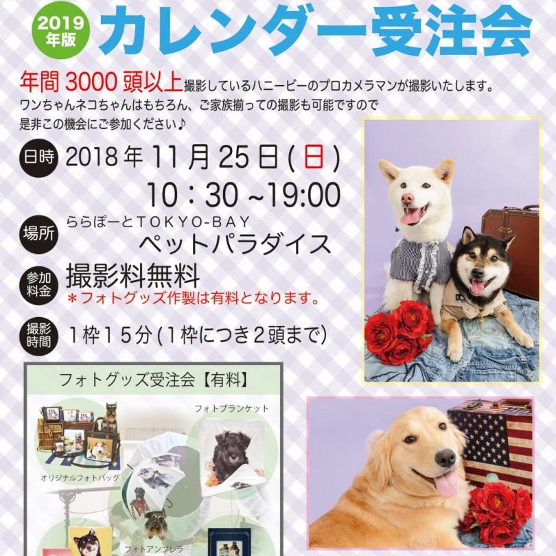 th_ハニービー撮影会_ららぽーとTOKYO-BAYペットパラダイス(11月)
