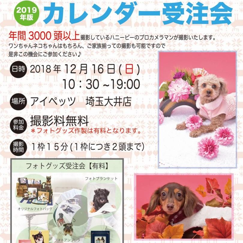 th_ハニービー撮影会_アイペッツ埼玉大井店(12月)