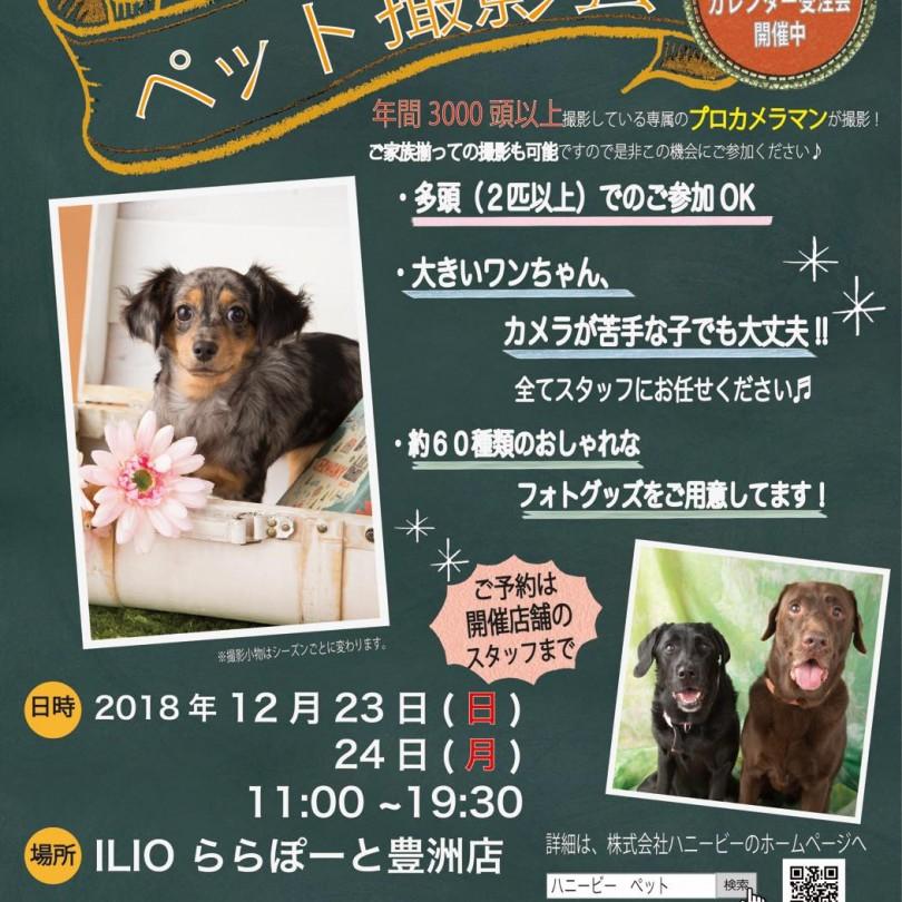 th_ハニービー撮影会POP_ILIOららぽーと豊洲店(12月)